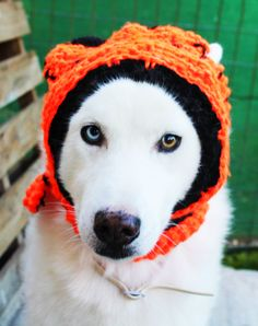 Jack Skellingon-Nightmare Before Christmas inspired custom made Large Dog Beanie hat - Scarf combo/costume accessory for walks or Halloween - pinned by pin4etsy.com