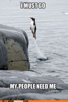 Penguin to the Rescue!