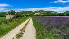LVE39 - Champs de lavandes à Bras d'Asse - Alpes de Haute Provence 04