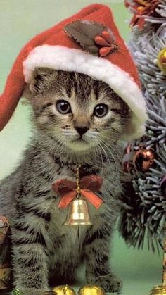 """Santa Claws"" is coming to town. For more Christmas cats, visit… Christmas Kitten, Christmas Animals, Merry Christmas, Christmas Morning, Funny Christmas, Celebrating Christmas, Christmas Items, Cute Kittens, Cats And Kittens"