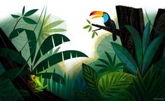 toucans and frogs