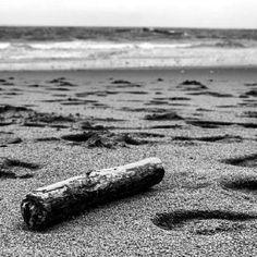 Intentando descifrar el mensaje sin botella que trajo la mar...