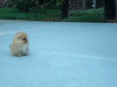 The 40 Greatest Dog GIFs Of All Time this jsut made my life