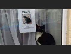 Missing Cat Poster Cute Pinterest Missing Cat Poster Cat - Missing cat gets found next to his own missing cat poster