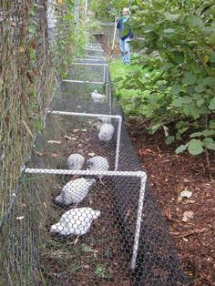 Build A DIY Chicken Tunnel In Your Backyard. Love this design.