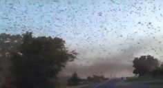An apocalyptic video from Russia captures an enormous swarm of locusts filling the sky and forming massive clouds consisting entirely of the insatiable insects.