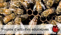 Trousse d'activités éducative: Les abeilles à l'œuvre. Pour les élèves de la maternelle à la 3e année. Saviez-vous que c'est au plus petit animal de la ferme que revient le rôle le plus important dans la production de notre nourriture ? Avec des feuilles de travail et des activités éducatives comme l'art, les jeux, les contes, le jardinage et le cuisson.