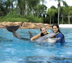 Best Dolphin experience in the Cancun area