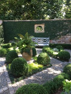 Walled courtyard garden with Boxwood and Fig Vine. #gardenvinesbeautiful
