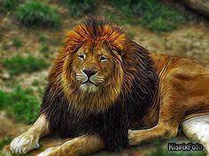 Leon Lion, Animals, Leo, Animales, Animaux, Lions, Animal, Animais