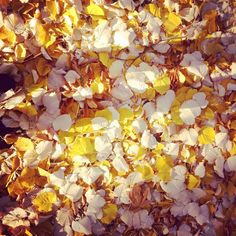 """""""November"""" ©_charssy_"""