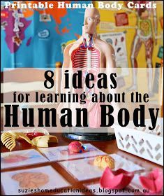 Suzie's Home Education Ideas: 8 Ideas for learning about the Human Body - FREE printable human anatomy three-part cards grade anatomy unit Elementary Science, Science Classroom, Teaching Science, Science Education, Science For Kids, Science Activities, Health Education, Physical Education, Health Class