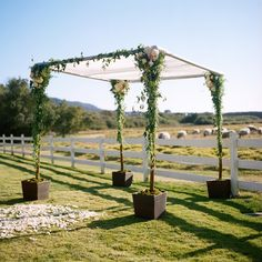 Elegant chuppah filled with garden roses and traling vines.  #missionranch Photo: www.christinamcneill.com