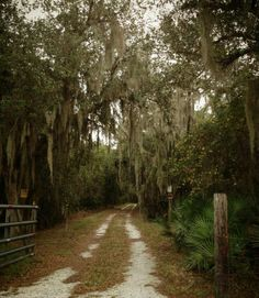 Old Florida...private road...like ones to the Myakka River East of Laurel FL...