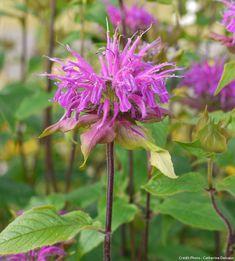 56 Meilleures Images Du Tableau Fleurs Violettes Purple Flowers