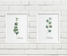 Eucalyptus watercolor print/set Eucalyptus watercolor/botanical Eucalyptus watercolor/leaf Eucalyptus watercolor/watercolor herb/botanical by BeautyOfPrints on Etsy