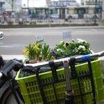 Bicycle garden – Guerilla gardening in fietskratten!