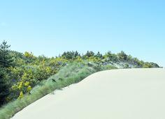 Oregon dunes, photo by Zack Seckler