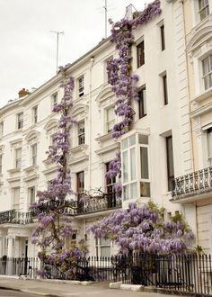 Wisteria grows on a building in London, England (via Exterior Envy /(imagem JPEG, pixels))