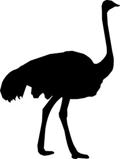 Silhouette, Ostrich, Zoo, Feather