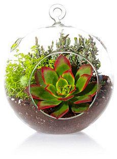 """8"""" Globe Succulent Terrarium Kit, Live"""