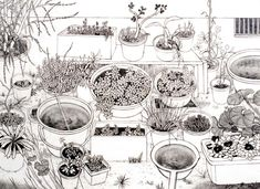Works by Yukiko Suto Pots 鉢 2008 Pencil and colored pencil on paper 52.8 x 72.8 cm