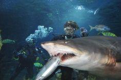 Shark feeding @Turkuazoo Akvaryum aquarium