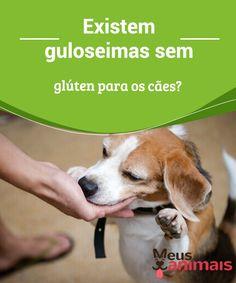 Existem guloseimas sem glúten para os cachorros?  Os #cães padecem de muitas #doenças similares às nossas. Por exemplo, a doença celíaca. Sim, isso mesmo, os #cães podem ser intolerantes ao #glúten. #Alimentação