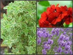 Plants that deter cats from your front porch: Lemon Thyme, Geranium, and Lavender. Not a guarantee, but it's worth a try!