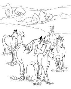 breyer horse coloring pages.html