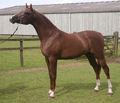 THE MAJESTY OF THE ARAB HORSE - http://www.1pic4u.com/blog/2014/10/05/the-majesty-of-the-arab-horse/