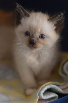 Your Nana had a kitten that looked just like this, once upon a time.