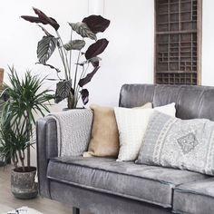 148 Best Ab Aufs Sofa Images In 2019 Velvet Sofa Home Living Room