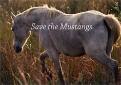 Save The Mustangs And Burros