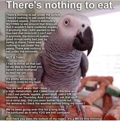 Bird logic. There's nothing to eat!