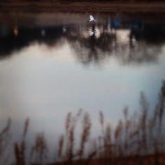 An egret taking flight over Lake Grapevine  #grapevine #travel #rvpark
