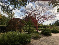 Atlanta Botanical Garden, Botanical Gardens, Country Roads, Plants, Flora, Plant