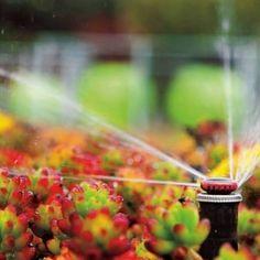 Irrigação  captação de água de chuva = sustentabilidade #agua #sustentabilidade #arquitetura #tratamento #incorporação #plantas #paisagismo #irrigação #irrigation #brasil by az_irrigacao http://ift.tt/1sdONhK