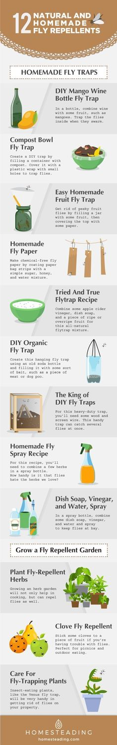 If you know of the unhealthy and even dangerous long-term effects of chemical pest repellent, you wo Homemade Fruit Fly Trap, Homemade Fly Spray, Tips And Tricks, Get Rid Of Flies, Fly Repellant, Insect Repellent, Fly Deterrent, Fly Paper, Shed Plans