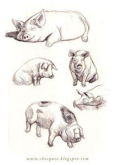 The Farm Animals Pencil Drawing 19 - Art Animal Sketches, Art Drawings Sketches, Cute Drawings, Pencil Drawings Of Animals, Vintage Illustration, Pig Illustration, Illustrations, Pig Drawing, Painting & Drawing