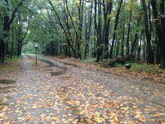Herfst, Vracheltse heide