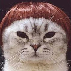 Pin for Later: Is There Anything Better Than Cats Wearing Wigs? The Sharon Osbourne Source: Instagram user elsita_28