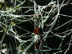 A spider's kingdom emerges from the mist