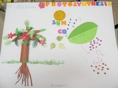 Photosynthesis School Project