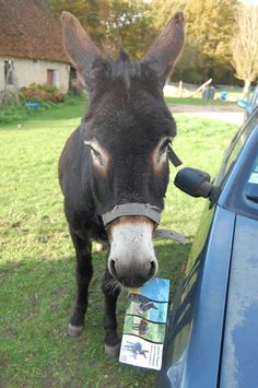 """""""Bon, pas de panique, ne bouge pas, je te l'amène"""". Courtesy: Korrig'âne, Planguenoual (France)."""