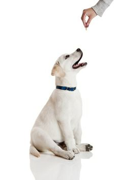 10 Common Dog Behaviors. ___ check out now!
