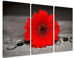 Zwart Wit Foto Schilderij met rood kleuraccent van een bloem. Deze wanddecoratie is verkrijgbaar als drieluik canvas of een geheel.