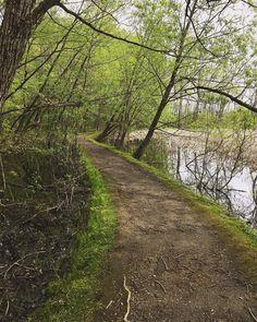 The path... #nature #foret #quebec #macapitale #arbre #été #samedi #famille