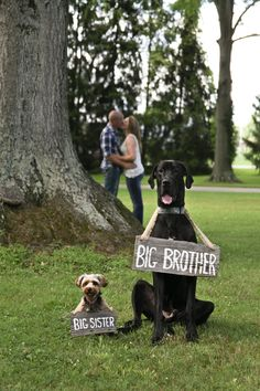 Pregnancy Announcement...if only our dogs were this well behaved