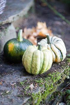 gourds... via @Lucy Kemp Kemp Gray Musings